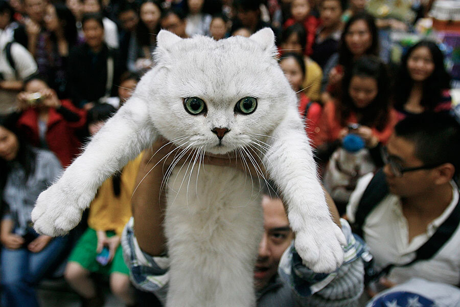 How The Chinese Domesticated Cats 5 300 Years Ago Csmonitor Com