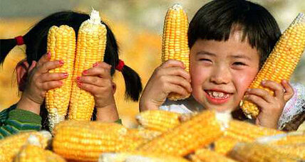 Did China steal US corn? Six charged with digging up bioengineered seed.