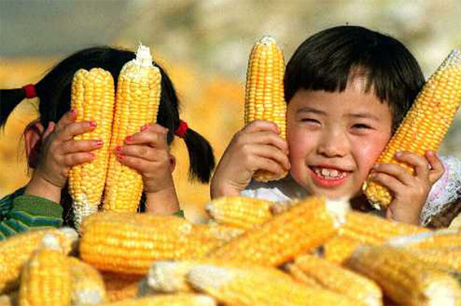 Image result for U.S., Corn, for China, photos