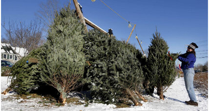 Christmas trees: What 'treedition' says about your family