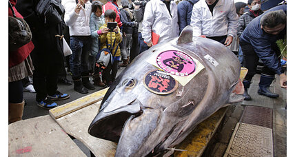 Bluefin tuna prices plunge, despite shortage