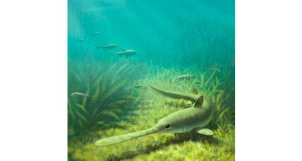 Scientist identifies an ancient shark nursery in ... Illinois
