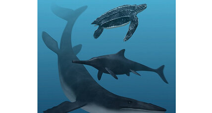 Ancient sea monsters had black skin, scales, say scientists