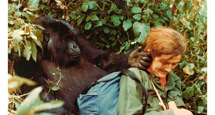 Dian Fossey: What was her biggest discovery?