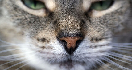 E-whiskers: Will human technology finally catch up with cats?