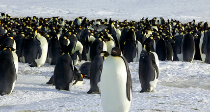 Antarctica warming tied to natural cycle in tropical Atlantic, study says (+video)