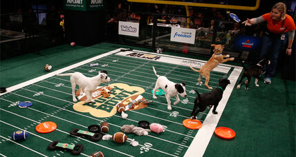 Puppy Bowl pre-game: pamper your pet
