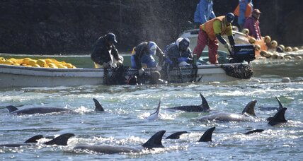 Japan dolphin slaughter draws tough rebuke from Ambassador Kennedy (+video)