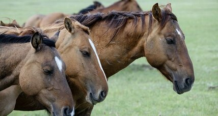 Saving horses from slaughter