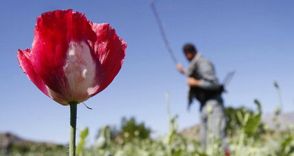 Resurgent Afghanistan drug trade threatening US goals, Pentagon warns