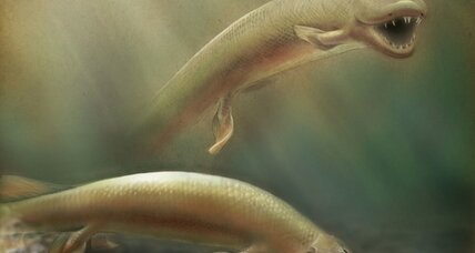 How a bizarre fish could explain how your limbs evolved
