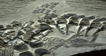 Fossil shows mother reptile in act of giving live birth, say scientists