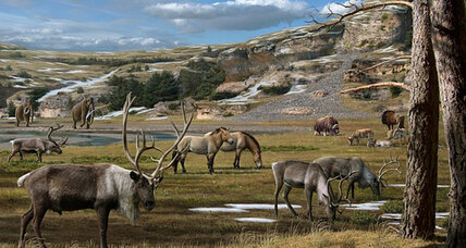 Woolly rhinoceroses and woolly mammoths ate forbs, say scientists