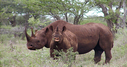 Can CSI-style tactics help save Africa's rhinos? (+video)