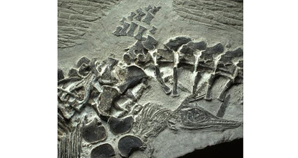 How did live birth evolve? Surprising fossil find offers clues.