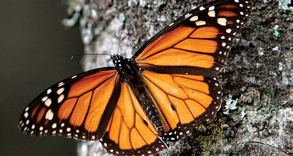 Good Reads: From vanishing monarchs, to superveggies, to scientific knowledge