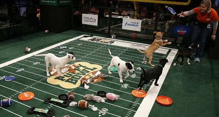 No fan of Super Bowl football? Try the 'Puppy Bowl'