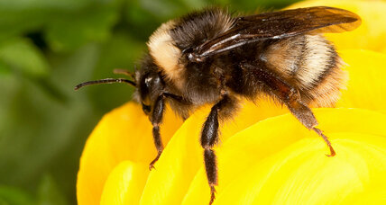 Growing insects: Farmers can help bring back pollinators