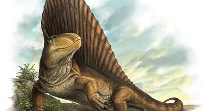 Teeth left behind by extinct Dimetrodon give important clues