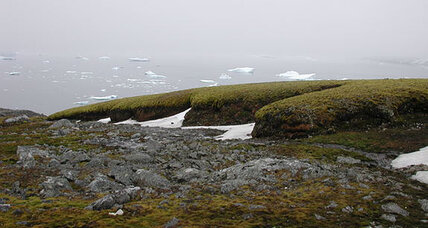 Scientists revive 1,500-year-old Antarctic moss