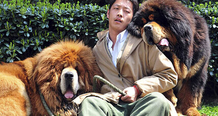 Tibetan mastiff twins sell for record-breaking $3 million in China