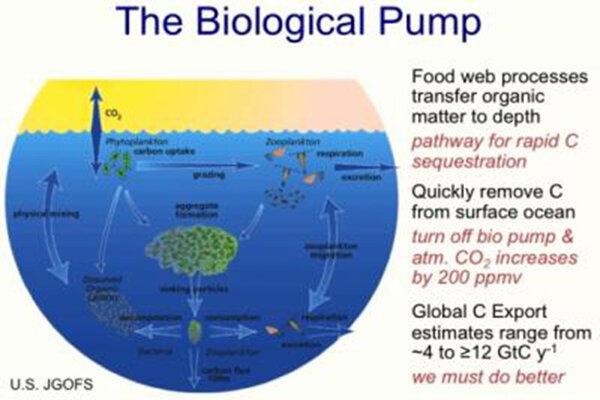 Organic Food Zone