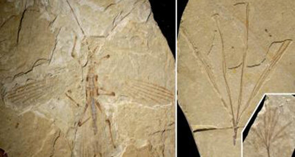 Paleontologists spot stick insect fossil camouflaging itself as a stick fossil