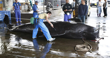 UN orders Japan to stop whaling in Antarctic waters (+video)