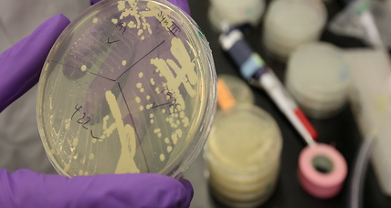 Artificial yeast chromosome brings science one step closer synthetic life (+video)