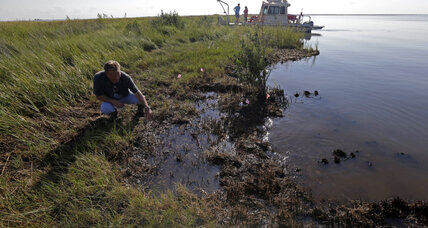 Gulf oil spill: how wildlife is still challenged four years later