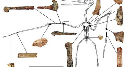 Paleontologists discover oldest known pterodactyloid