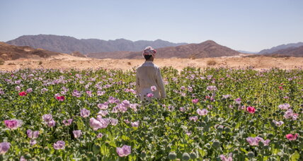 Poppies replace tourists in Egypt's Sinai desert