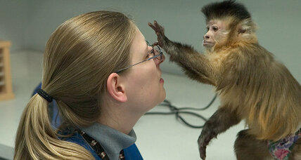 Monkeys can do math, say scientists