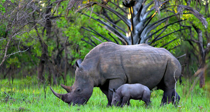 Rhino horn is the same stuff as human nails. Still want some?