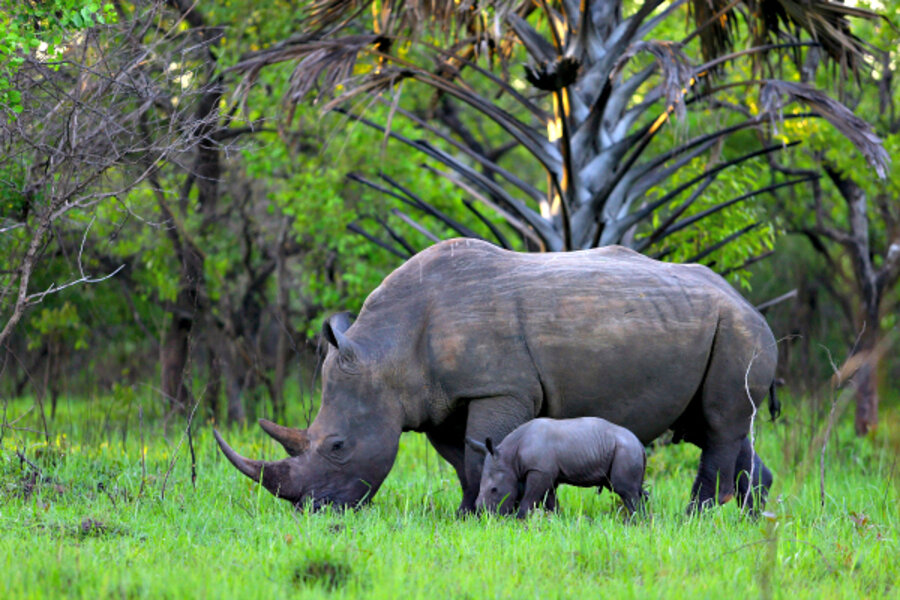 Rhino horn is the same stuff as human nails  Still want some