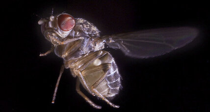 What do fruit flies and fighter jets have in common? (+video)