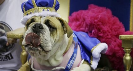 Lucey wins most beautiful bulldog title