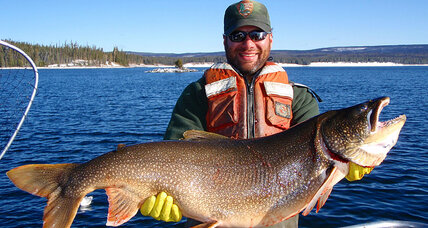 Yellowstone trout declining. Time to celebrate?
