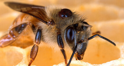 One in four honeybee colonies died off this winter, and that's an improvement