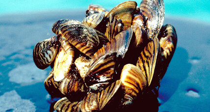 Texas declares war on zebra mussels