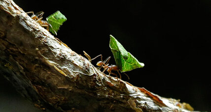 Are you smarter than an ant colony?