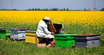Saving the bees: 13 groups buzzing with solutions
