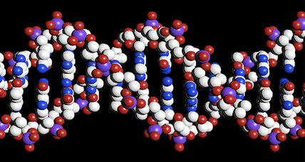 Scientists add two new letters to DNA's 'alphabet'