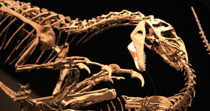 Giant dinosaur had astonishing ability to heal broken bones