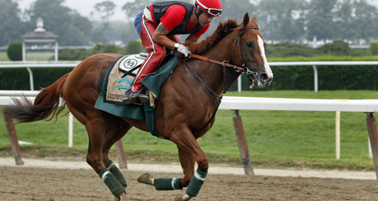 California Chrome owners want horse to keep racing after Belmont Stakes