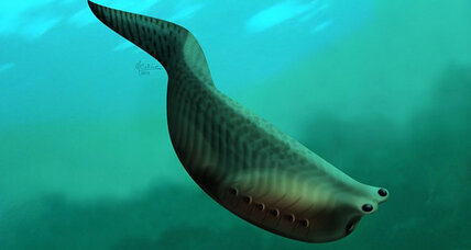 Ancient, tiny fish might be ancestor of almost all vertebrates (including you)