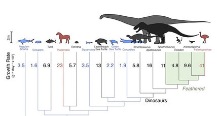 Were dinosaurs warm-blooded or cold-blooded? Yes, say scientists.