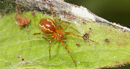 Spiders divide labor by personality, say scientists