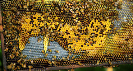White House announces strategy to save the honeybees