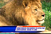 Memphis zoo bans woman for climbing into lion enclosure, trying to feed them cookies